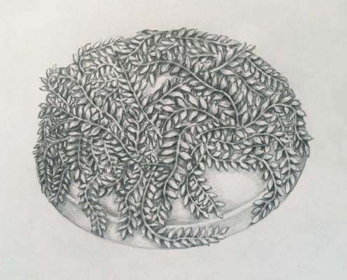 Handmade Gardens of Ninfa Drawing