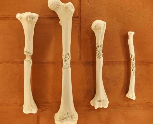 Royal Hospital for Children Artwork, sculpture, bones, cast jesmonite on brickwork background in wall mounted cabinet
